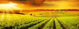 crop_insurance